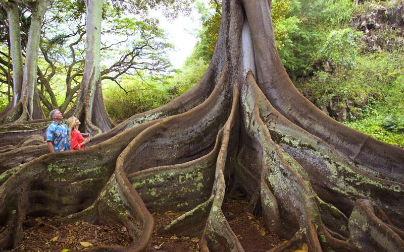 Allerton National Tropical Botanical Garden