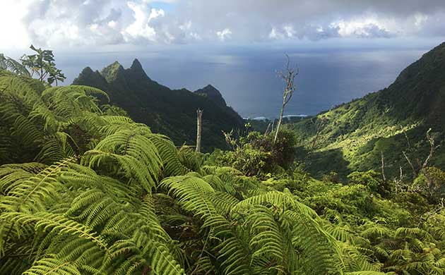 REDEFINING RESEARCH in the Limahuli Preserve | National Tropical ...
