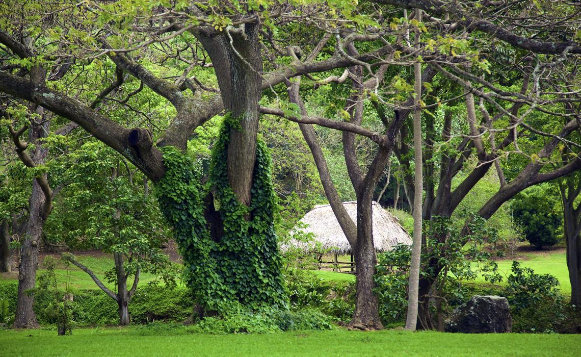 Mcbryde National Tropical Botanical Garden