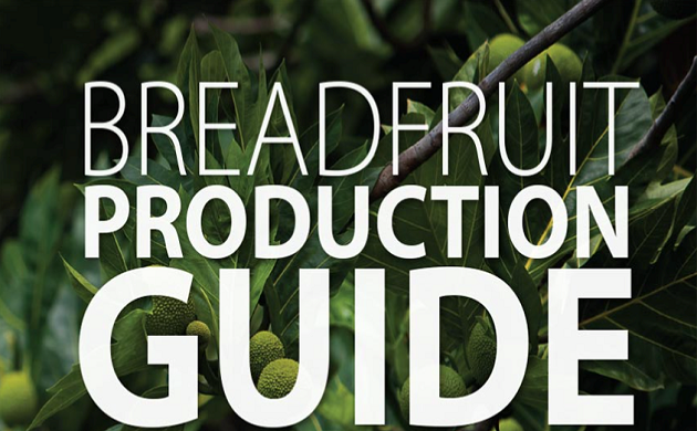 breadfruit production guide