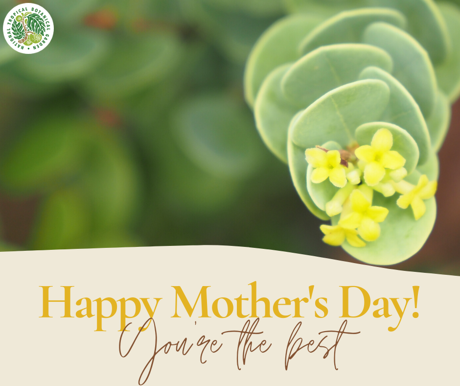 Can't see your mom in person this Mother's Day? Send her a virtual Mother's Day bouquet courtesy of NTBG!