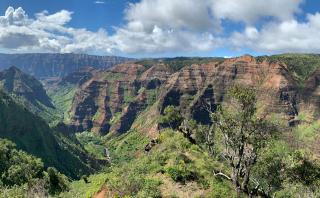 Habitat for Schiedea viscosa within the interior cliffs and forested canyons of Kaua`i