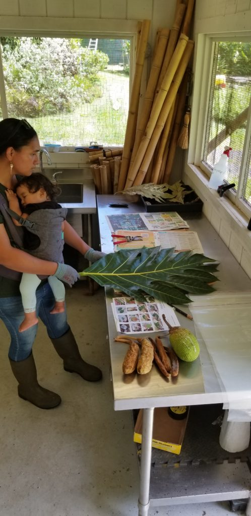 Help support our ohana by participating in our online auction. This picture is one of our Horticulture Team members working at our Kahanu Garden on Maui