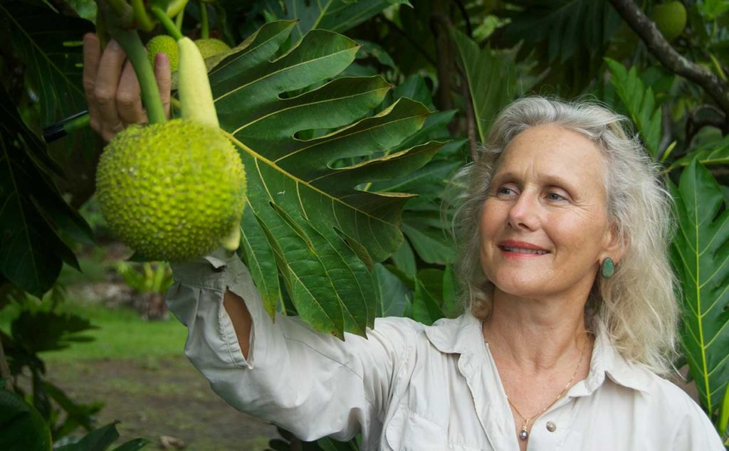 Dr. Diane Ragone, Director of NTBG's breadfruit Institute with ulu on a tree. NTBG and the Breadfruit Institute are using research to bolster food security on the local and global level.