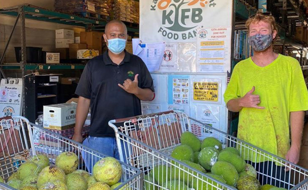 Breadfruit harvested from the Regenerative Organic Breadfruit Agroforest demonstration in McBryde Garden was donated to the Kauai Independent Food Bank.