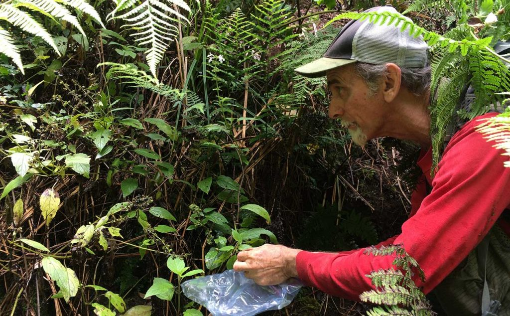 Ken Wood NTBG Research Biologist collects plant material to protect biodiversity