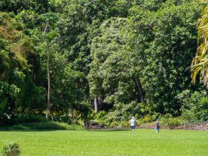 Two people walking in lush garden.